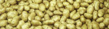 Fosfaat uit afvalwater van aardappels en huishoudens
